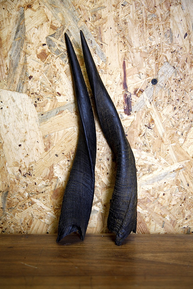 Set of Bushbuck horns 03