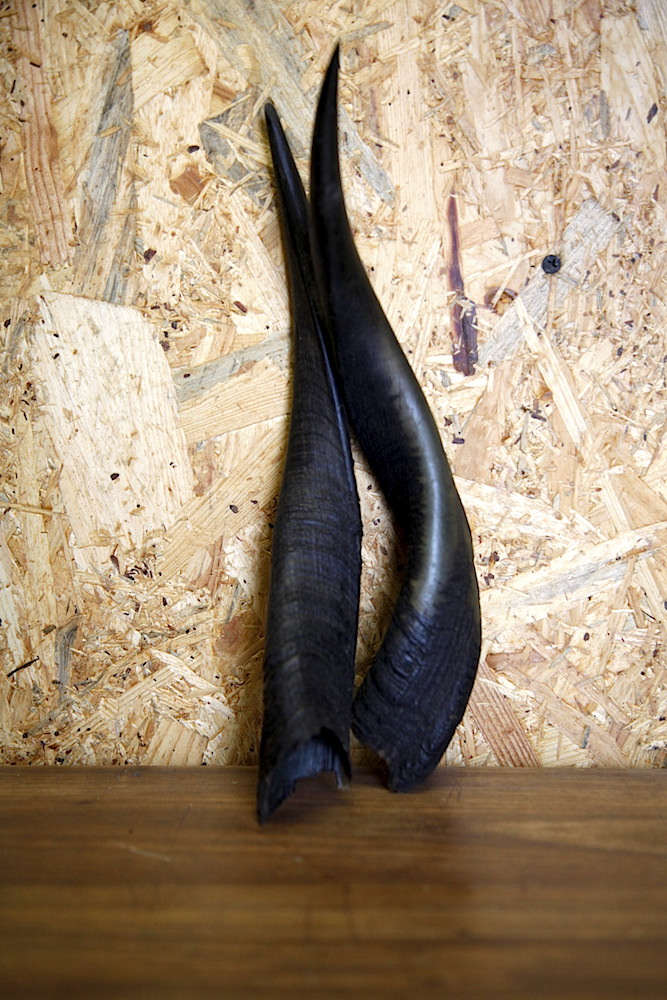 Set of Bushbuck horns 02