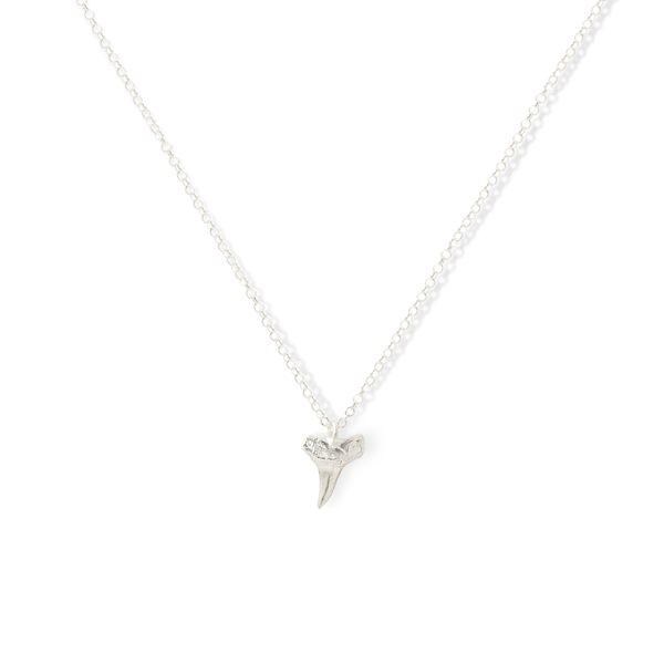 Small Great White Shark Tooth Necklace