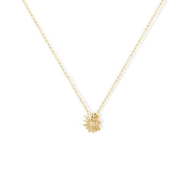 Star Shell Necklace